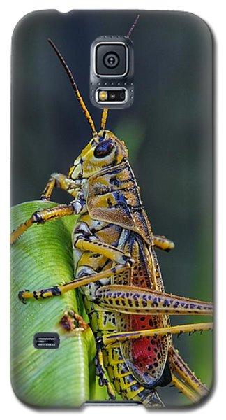 Lubber Grasshopper Galaxy S5 Case