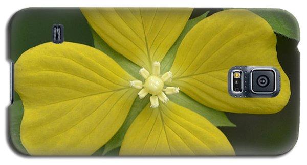 Lucky Four Leaf Flower Galaxy S5 Case
