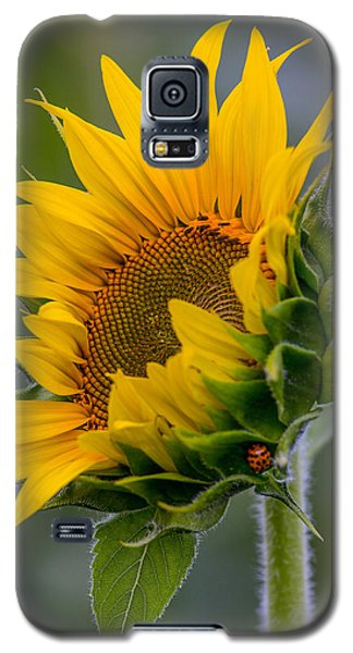 Lucky Lady Galaxy S5 Case