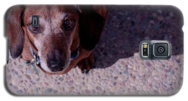 Galaxy S5 Case featuring the photograph Lucy by Lora Lee Chapman