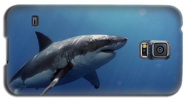 Lucy Posing At Isla Guadalupe Galaxy S5 Case by Shane Linke