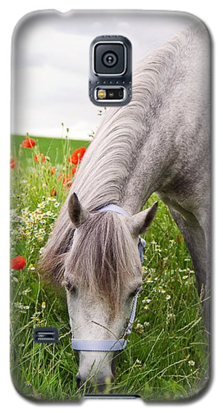 Lulu And The Poppies  Galaxy S5 Case