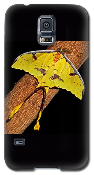 Galaxy S5 Case featuring the photograph Luna Moth by Judy Vincent