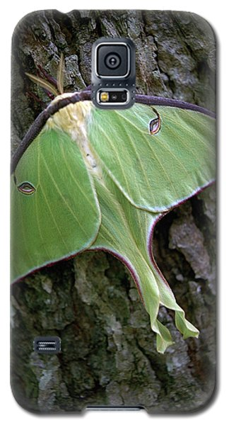Galaxy S5 Case featuring the photograph Luna Moth by Marie Hicks