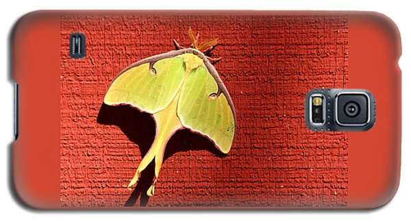 Luna Moth On Red Barn Galaxy S5 Case