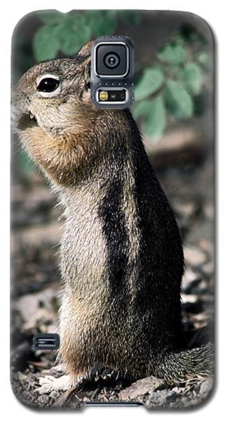 Galaxy S5 Case featuring the photograph Lunchtime For Ground Squirrel by Sally Weigand