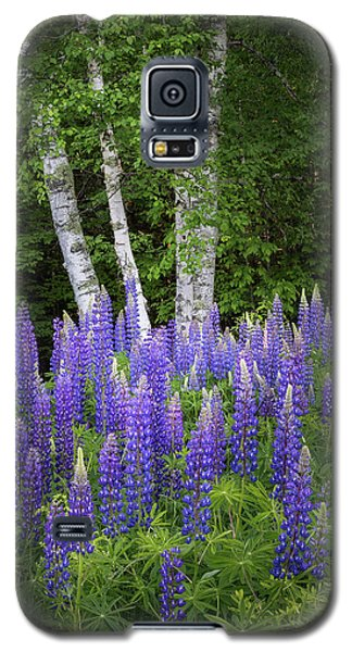 Lupine And Birch Tree Galaxy S5 Case