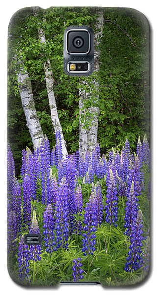 Lupine And Birch Tree Galaxy S5 Case