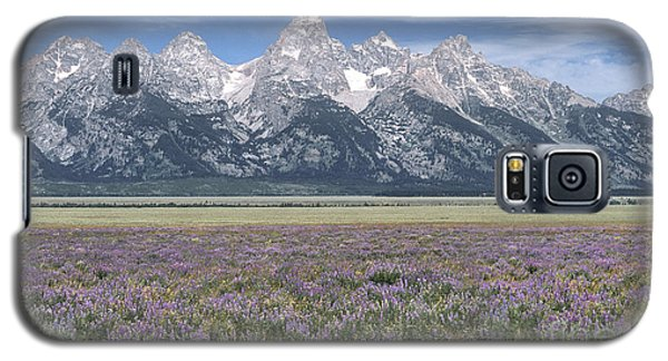 Lupine And Grand Tetons Galaxy S5 Case