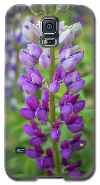 Galaxy S5 Case featuring the photograph Lupine Blossom by Robert Clifford