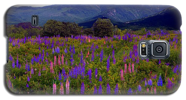 Lupine Field In Franconia Range Galaxy S5 Case