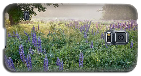 Lupine Field Galaxy S5 Case