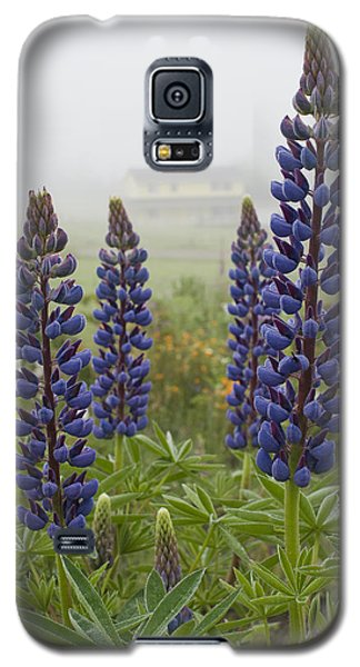 Lupine In The Fog Galaxy S5 Case