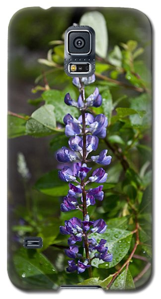 Lupine Galaxy S5 Case