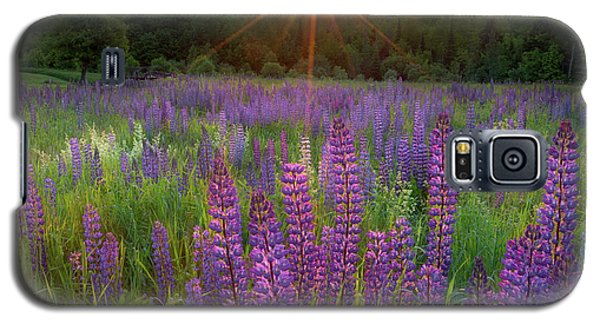 Lupine Lumination Square Galaxy S5 Case