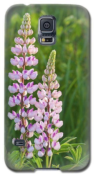 Galaxy S5 Case featuring the photograph Lupine Pair by Paul Miller