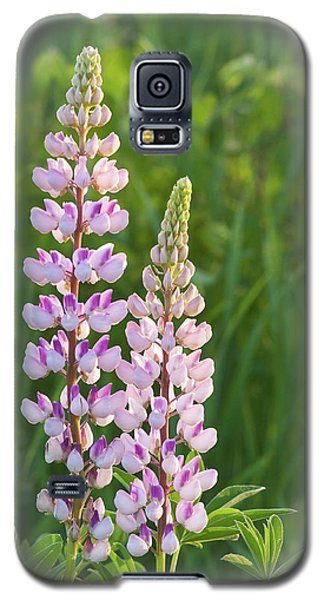 Lupine Pair Galaxy S5 Case by Paul Miller