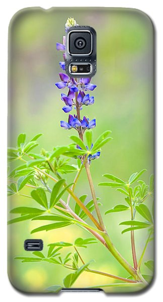 Galaxy S5 Case featuring the photograph Lupine by Ram Vasudev