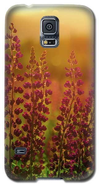 Lupines At Dawn Galaxy S5 Case