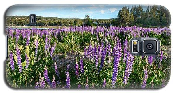 Lupines At Lake Tahoe Galaxy S5 Case