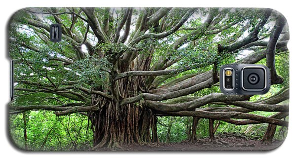 Lush Tropical Banyan Tree Galaxy S5 Case