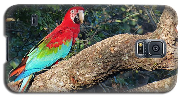 Macaw Resting Galaxy S5 Case