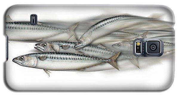 Mackerel School Of Fish - Scomber - Nautical Art - Seafood Art - Marine Art -game Fish Galaxy S5 Case