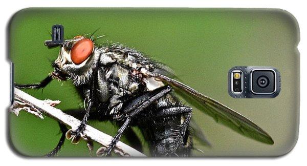 Macro Fly Galaxy S5 Case