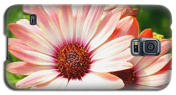 Macro Pink Cinnamon Tradewind Flower In The Garden Galaxy S5 Case by Amy McDaniel