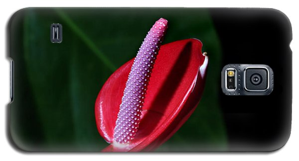 Macro Red  Anthurium Flower Galaxy S5 Case