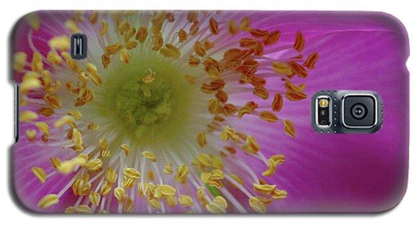 Macro Rosehip Bloom Galaxy S5 Case