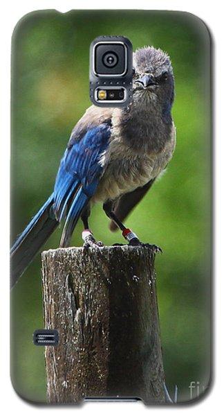 Mad Bird Galaxy S5 Case