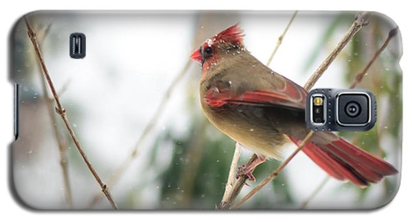 Madam Cardinal Galaxy S5 Case
