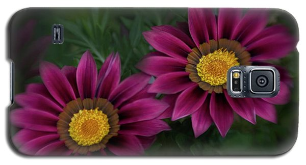 Galaxy S5 Case featuring the photograph Magenta African Daisies by David and Carol Kelly