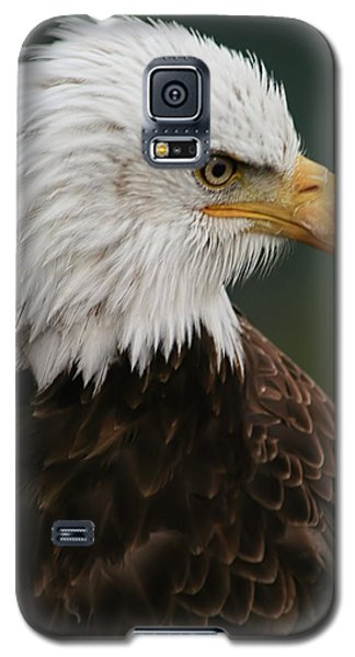 Galaxy S5 Case featuring the photograph Magestic Eagle by Jacqui Boonstra