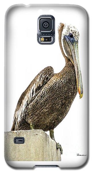 Majestic Gulf Shores Pelican 1071a Galaxy S5 Case