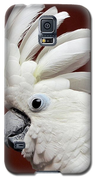 Maggie The Umbrella Cockatoo Galaxy S5 Case