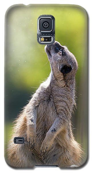 Meerkat Galaxy S5 Case - Magical Meerkat by Jane Rix