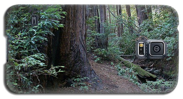 Magical Path Through The Redwoods On Mount Tamalpais Galaxy S5 Case
