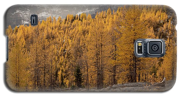 Magnificent Fall Galaxy S5 Case