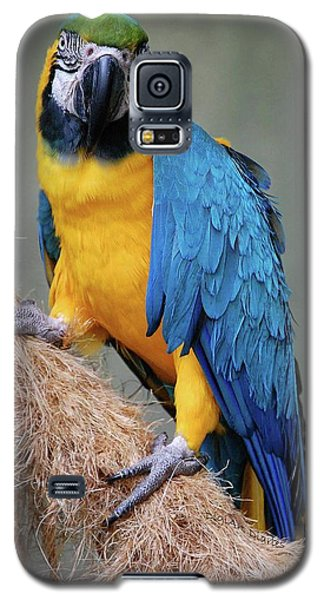 Magnificent Macaw Galaxy S5 Case
