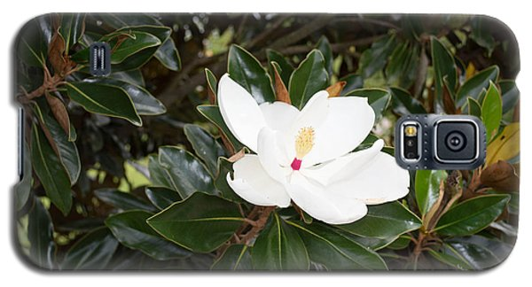 Galaxy S5 Case featuring the photograph Magnolia Blossom by Linda Geiger