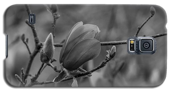 Magnolia Bw Blooms Buds Branches Galaxy S5 Case