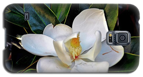 Galaxy S5 Case featuring the photograph Magnolia by Helen Haw