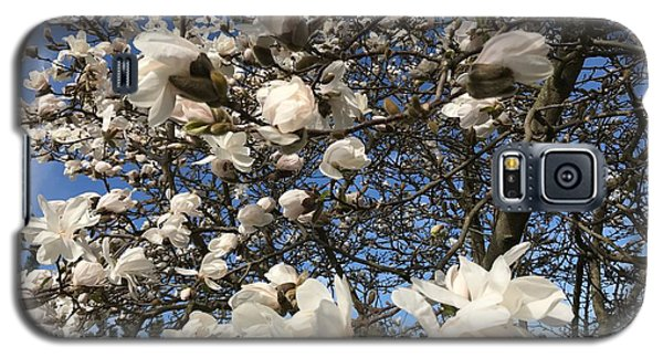 Galaxy S5 Case featuring the photograph Magnolia Tree In Blossom by Patricia Hofmeester