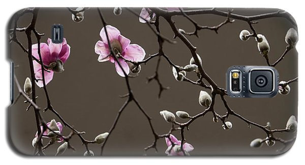Galaxy S5 Case featuring the photograph Magnolias In Bloom by Rob Amend