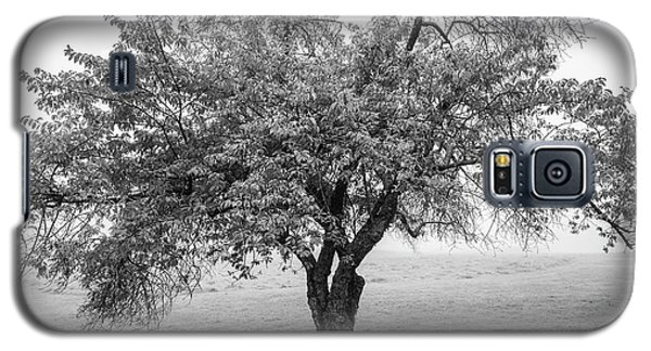 Galaxy S5 Case featuring the photograph Maine Apple Tree In Fog by Ranjay Mitra