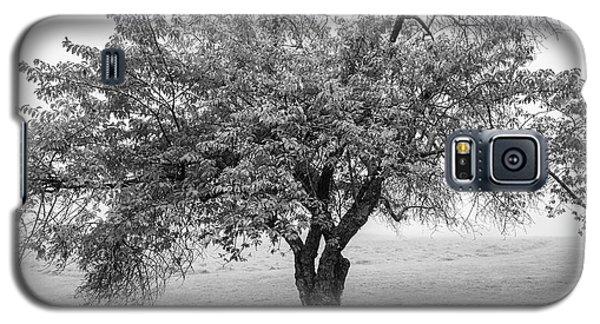Maine Apple Tree In Fog Galaxy S5 Case