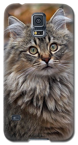 Galaxy S5 Case featuring the photograph Maine Coon Cat by Rona Black