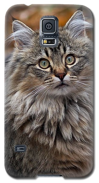 Maine Coon Cat Galaxy S5 Case